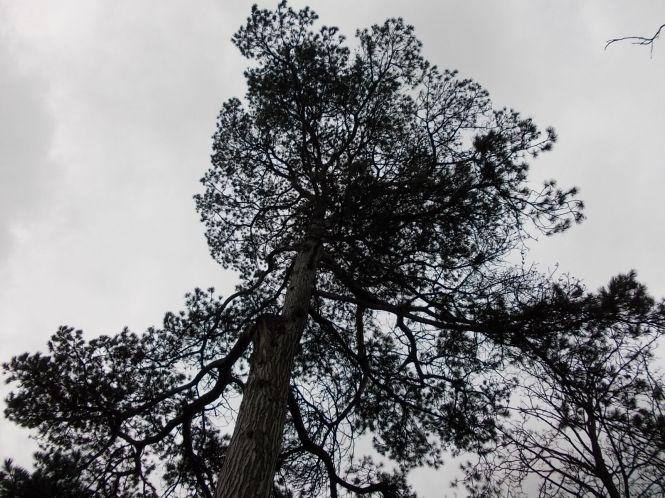 DSCN2296_Tree in Chippenham park